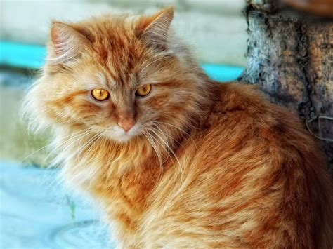 Macavity The Mystery Cat   Stuff that may only interest me