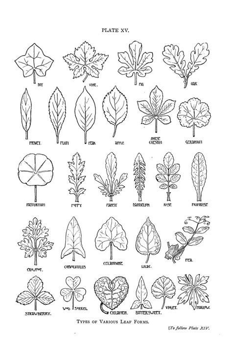 pattern name and classification 25 best ideas about leaf drawing on pinterest leaf