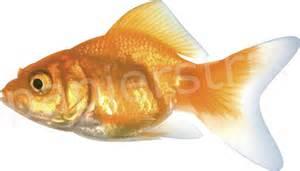 Goudje vis strijkapplicaties