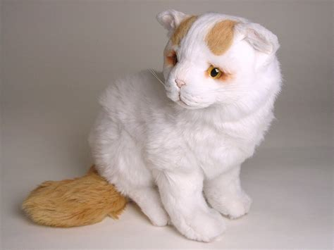 Vans Kitten turkish kitten 2318 turkish vans cats
