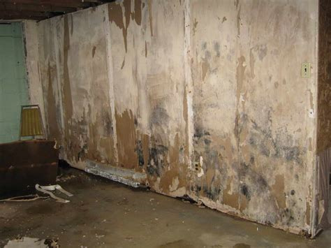 remove mold from basement smalltowndjs com