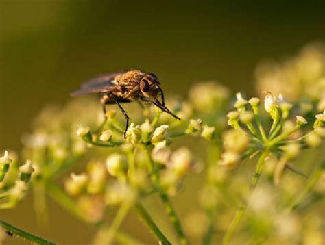enfermedades de las plantas de interior plagas comunes en plantas de interior ideas para