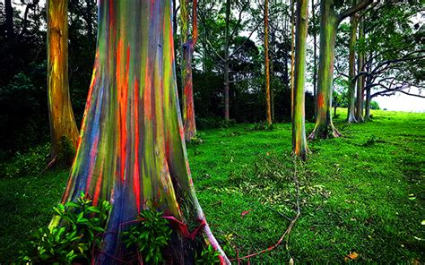 rainbow trees the forest of rainbow trees world s most expensive bonsai