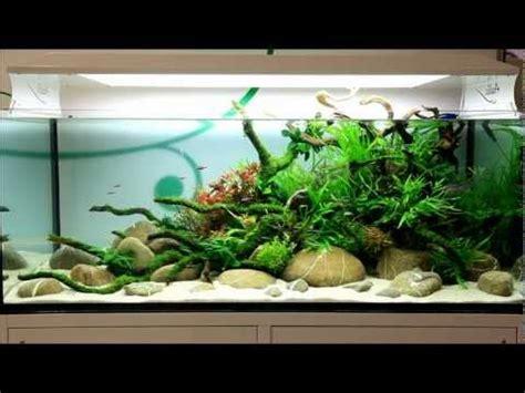 the aquatic plant society oliver knott aquascaper
