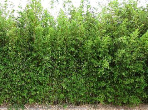 heckenpflanzen immergrün winterhart schnellwachsend 67 220 ber 1 000 ideen zu hecken auf g 228 rtnern