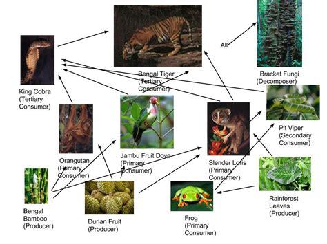 monkey food chain diagram food web trophic pyramid