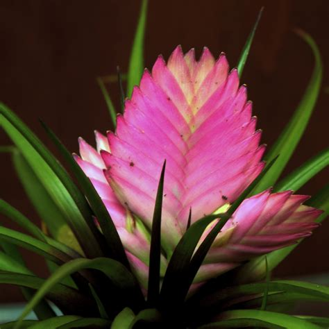 Design A House Online Tillandsia Flowers Oman Flowers Amp Gifts In Muscat
