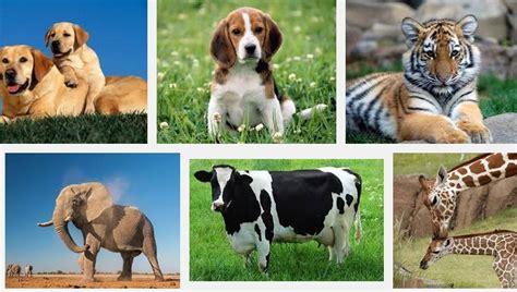 5 Animales Que Deberias Ver by Caracter 237 Sticas De Los Animales