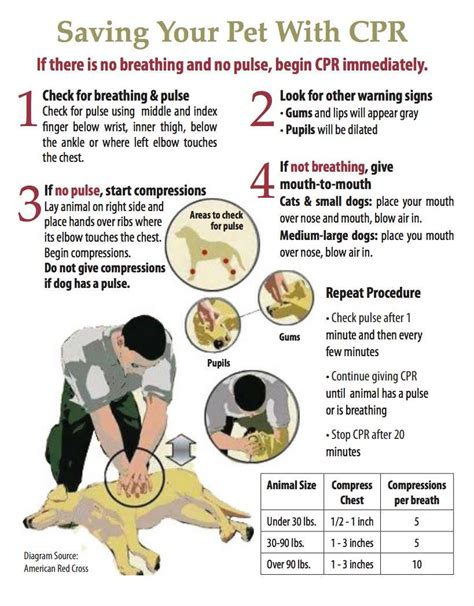 cpr for dogs saving your pet with cpr jolly pets