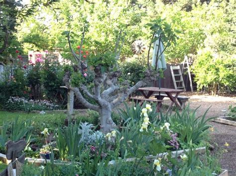 Serenity Gardens Bed And Breakfast by Serenity Gardens Bed And Breakfast Updated 2017 B B Reviews Price Comparison Merced Ca