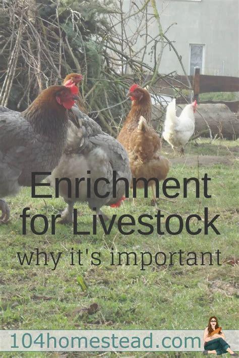 backyard breeder laws 100 what is a backyard breeder list of chicken