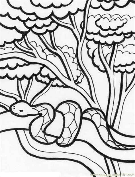 free printable rainforest coloring pages coloring pages of rainforest animals coloring home