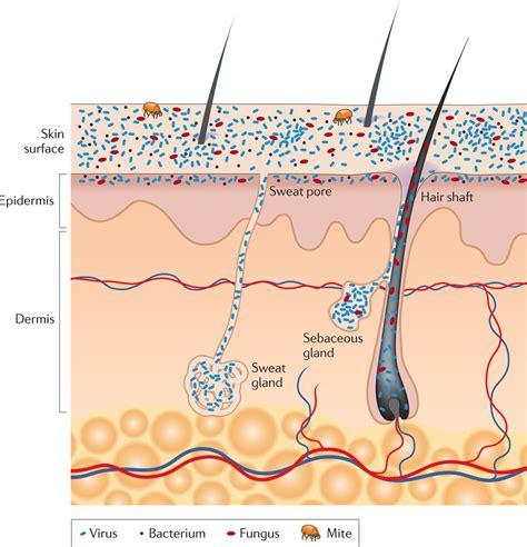 olfactics and olfactory diagnostics