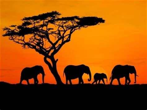 Afika Syari Black 4 tips for a south safari maiden voyage