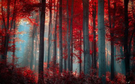 red forest nature wallpapers hd desktop  mobile