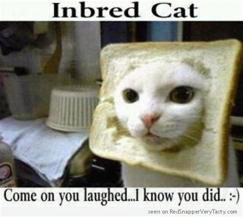 Cat In Bread Meme - 13 best images about cats on pinterest cats kittens and