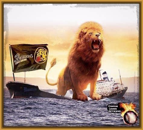 imagenes leones del ccs lindas fotos de leones del caracas imagenes de leones