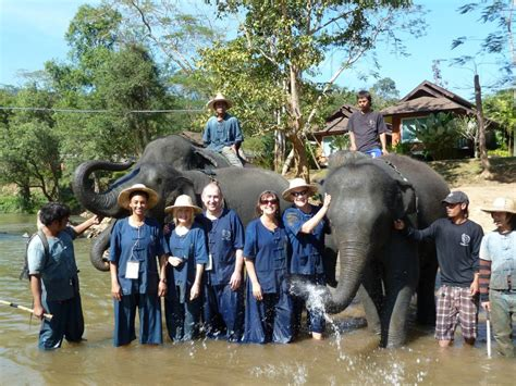 thai elephant home thailand asia johnson travel
