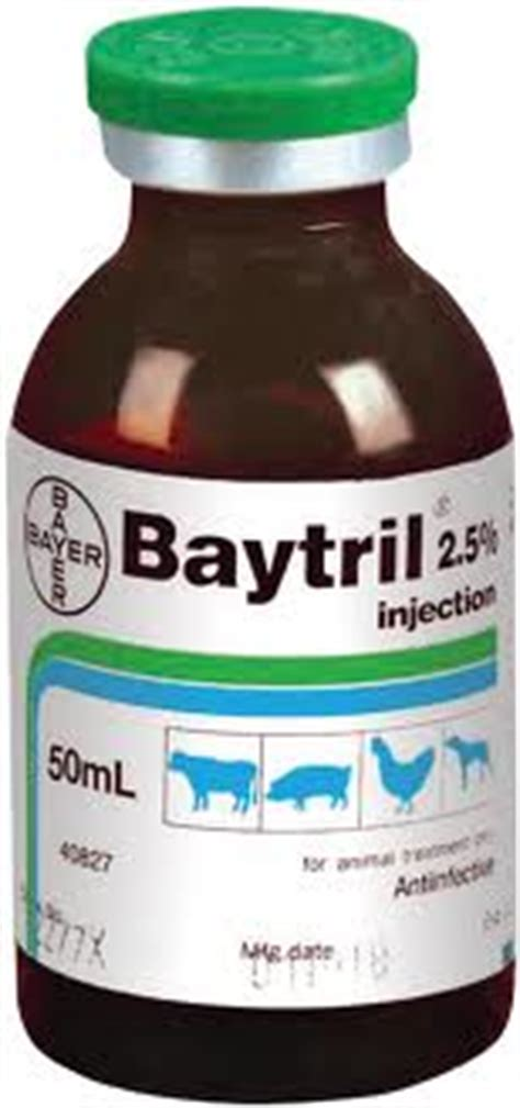 baytril dosage for dogs enrofloxacin cat