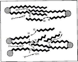 cadenas musculares scielo asociadas a deficiencias de selenio en rumiantes