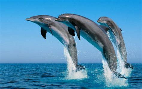 los animales marinos marine animales marinos qu 233 son tipos y caracter 237 sticas