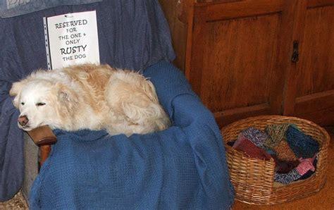 dog armchair garden journal 11
