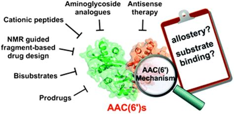 Aminoglycosides Also Search For Mini Review On Aminoglycoside Resistance Caused By N 6 Acetyltransferase