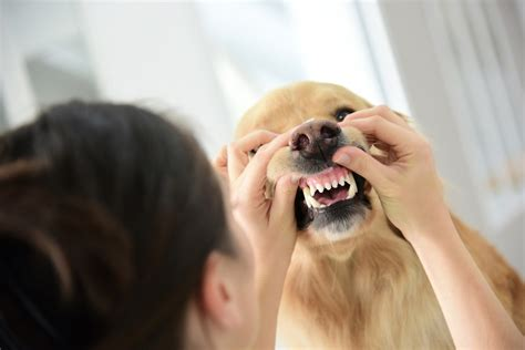 coronavirus in dogs vets in croydon gain a better understanding of the canine coronavirus