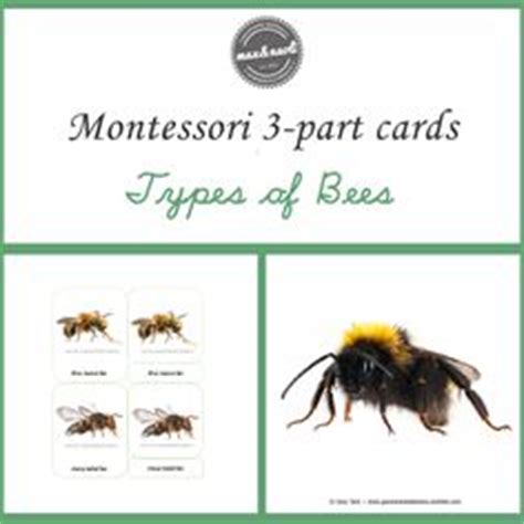 montessori three part card template free parts of a koala printable montessori printables