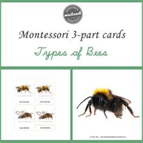 montessori 3 part cards template free parts of a koala printable montessori printables