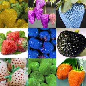 what color are strawberry seeds 10 colors 200 color strawberry seeds black blue