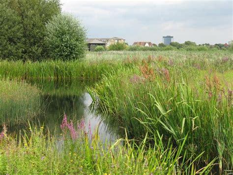 file urban landscape wwt london wetland centre