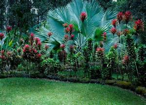 tropical garden this one has quot ni quot the bright pink plant an edible tuber garden