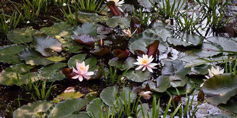 Grüner Sichtschutz Im Garten 1080 by Wasser Im Garten Kreative G 228 Rten