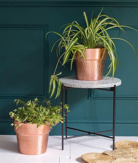 tips  choosing plant pots  house plants audenza