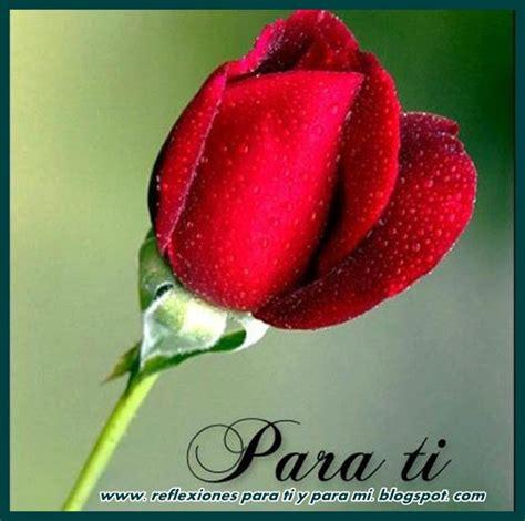 imágenes rosas para ti rosas para una dama imagui