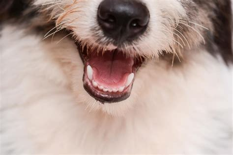 what do whiskers do for a why do dogs whiskers the facts about whiskers