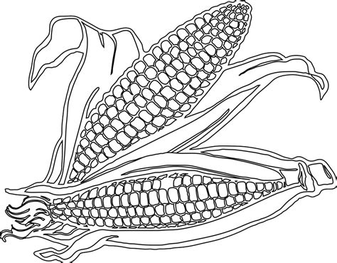 Corn Stalk Coloring Page Coloring Home Corn Color Page