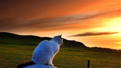gambar kucing  cantik  imut