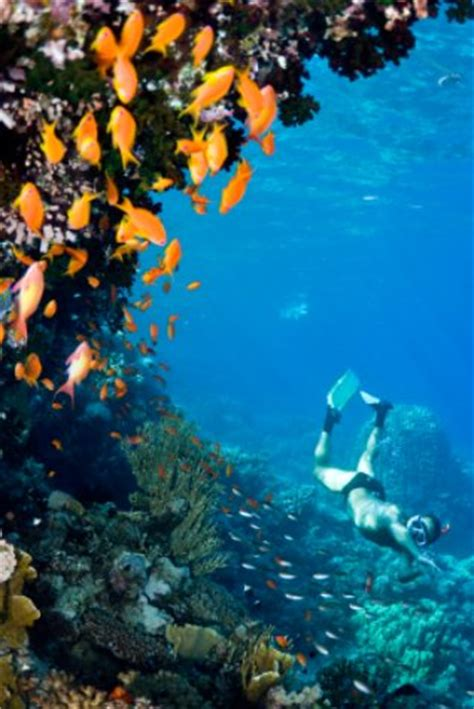 deerfield beach florida snorkeler and orange coral