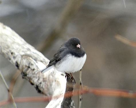 winter birdwatching tips from the birdchick minnesota
