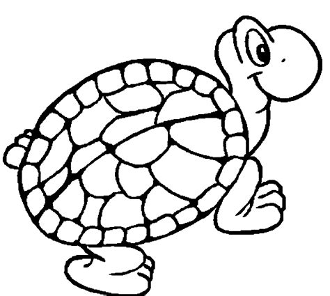 tortoise for coloring clipart best