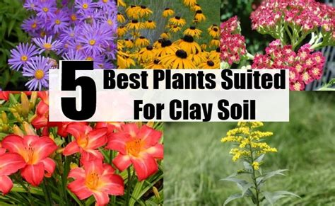 5 best plants suited for clay soil diy home life creative ideas for home garden