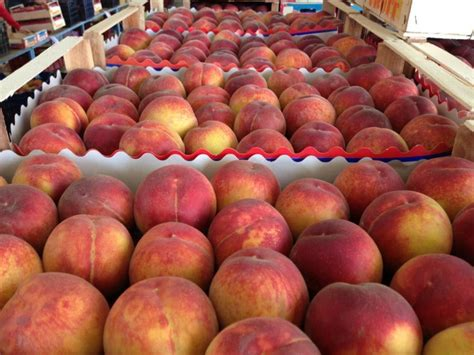 2 vegetables that destroy russia destroys nearly 300 tons of sanctioned fruit and