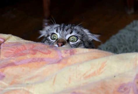 Cat Hiding Bed by Happy Birthday Stkr Zune Boards