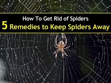 how to get rid of spiders in bedroom friday 20 may 2016 diy projects world newsletter