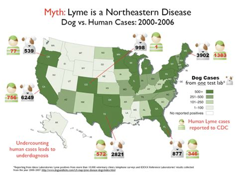 symptoms of lyme disease in dogs lyme disease dogs