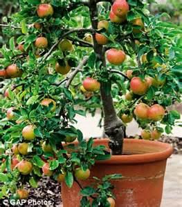 Bibit Tanaman Orange Siklam Cactus mari berbagi inspirasi tabulot adalah solusi bagi