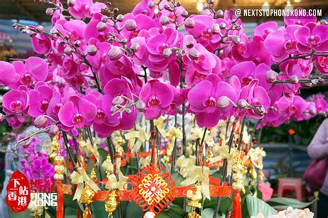 2018 hong kong chinese new year flower markets