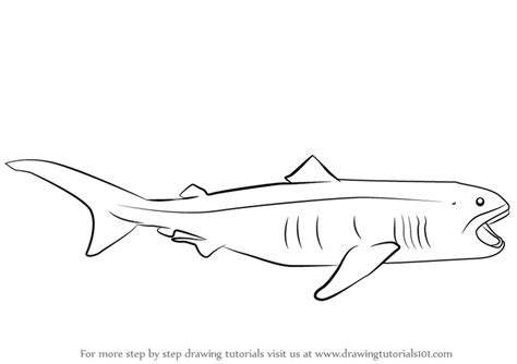 megamouth shark coloring page shark open mouth coloring pages coloring pages